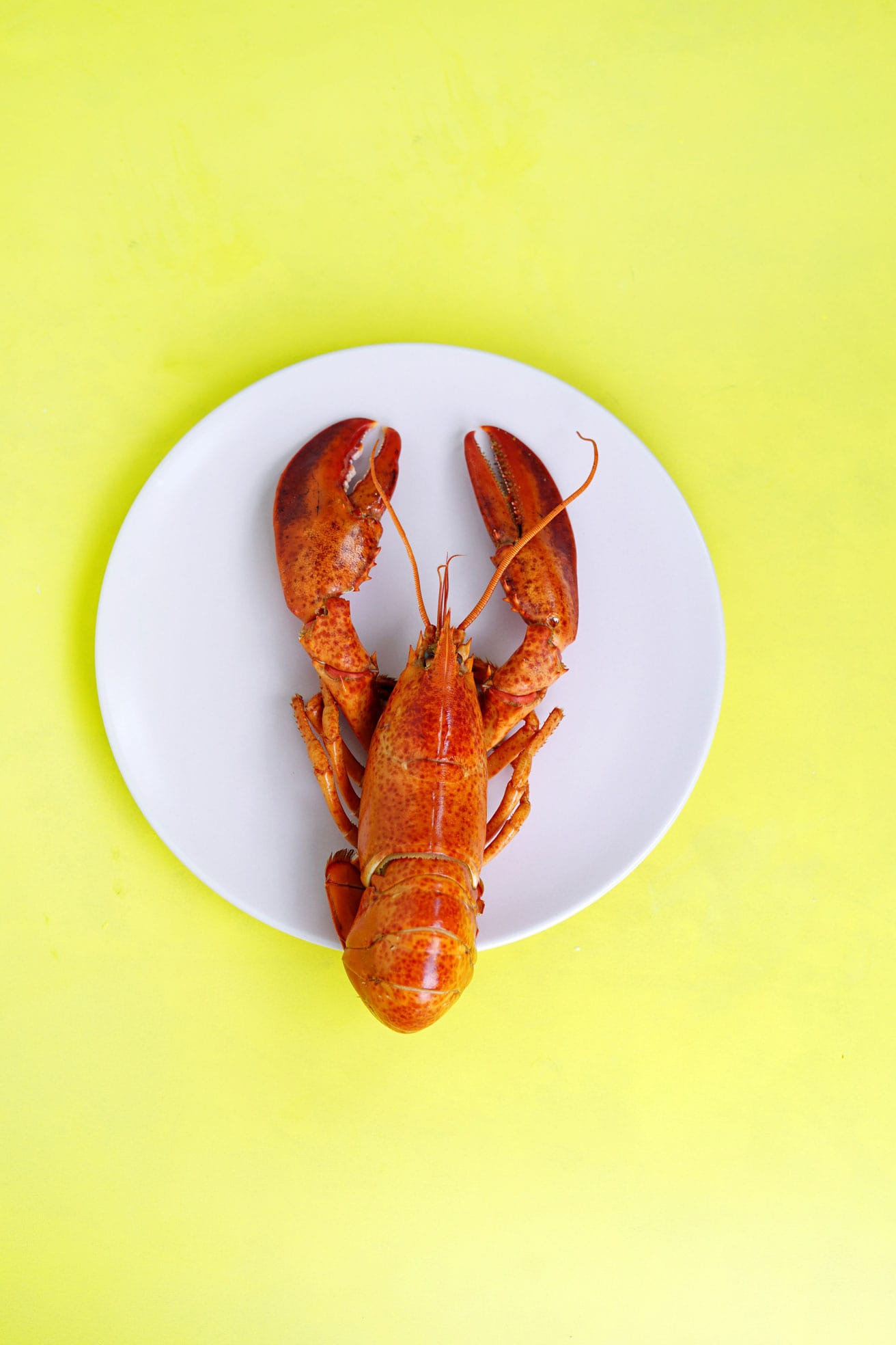 Lobster is expensive food to be on plate