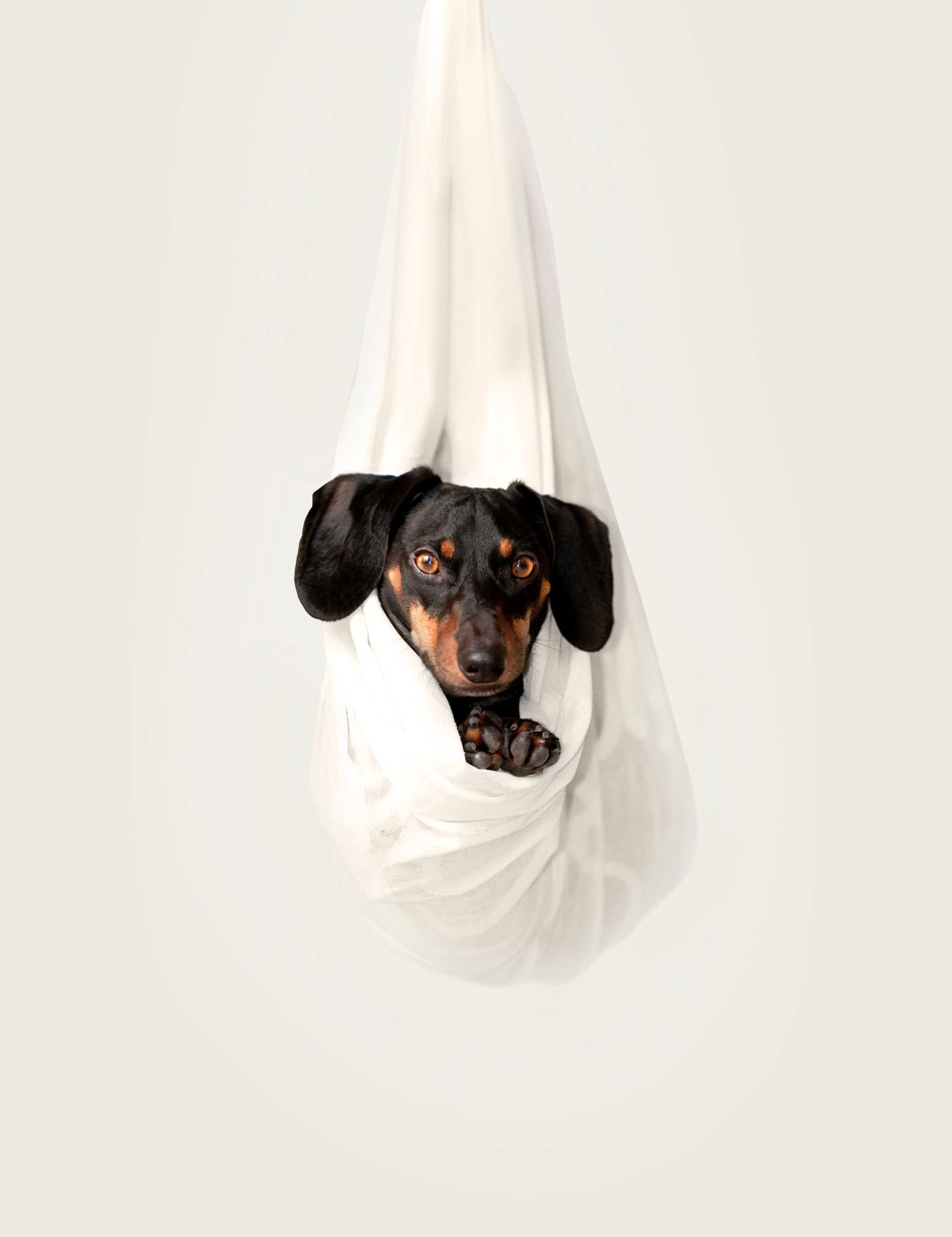 Hung your dog and take a photo